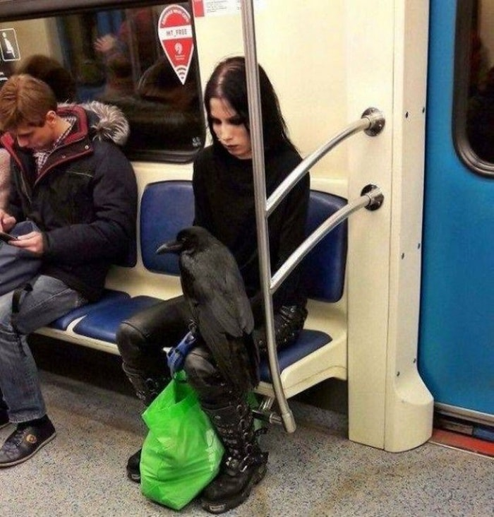28 Weird Things You Will See On Public Transportation-26