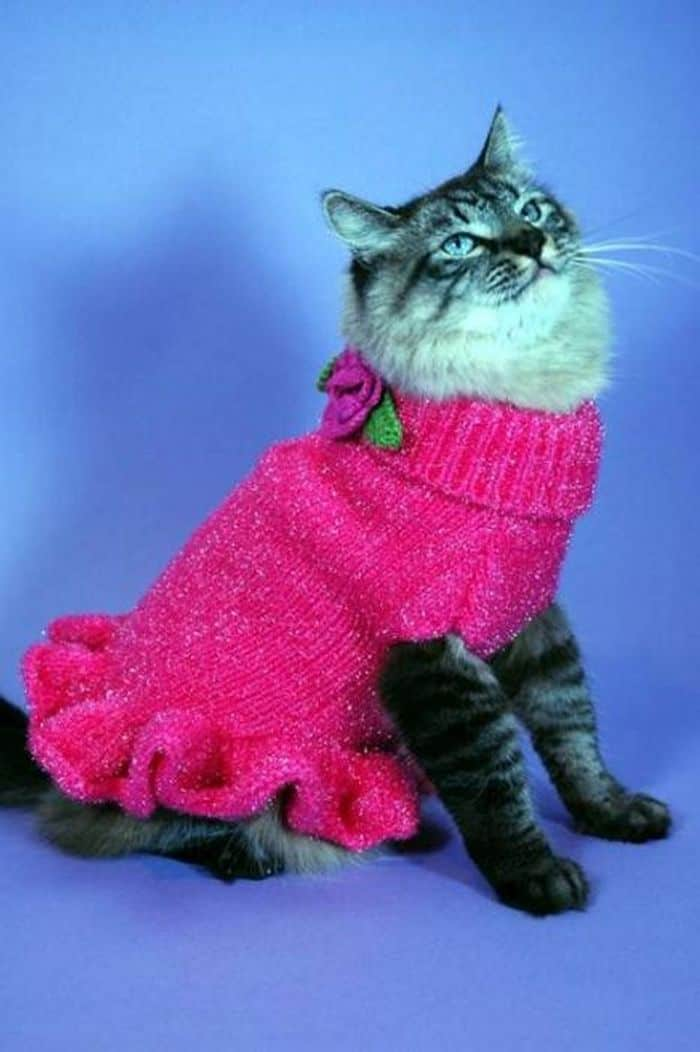 87 Well Dressed Animals That Will Make You LOL -25