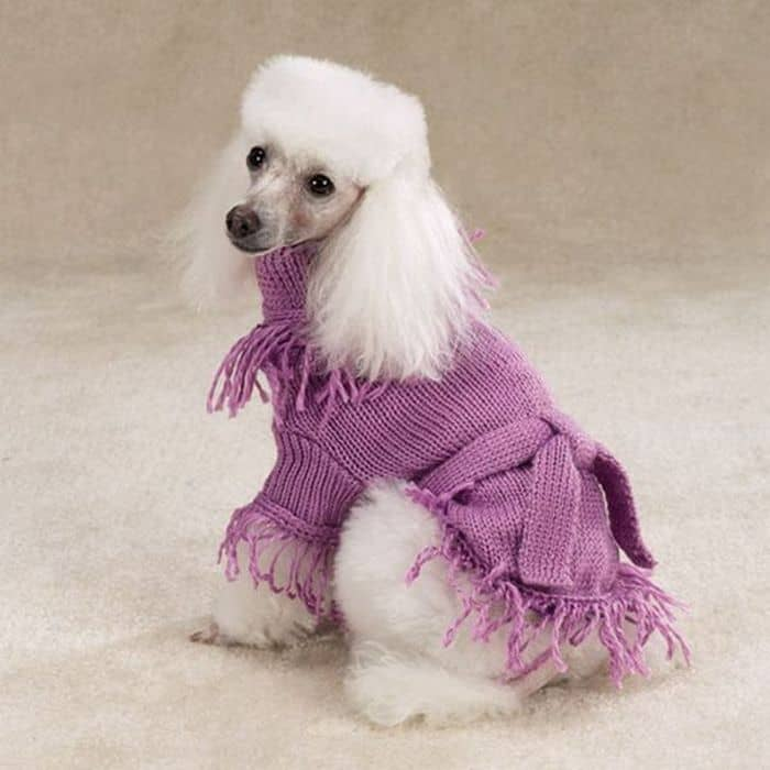 87 Well Dressed Animals That Will Make You LOL -34