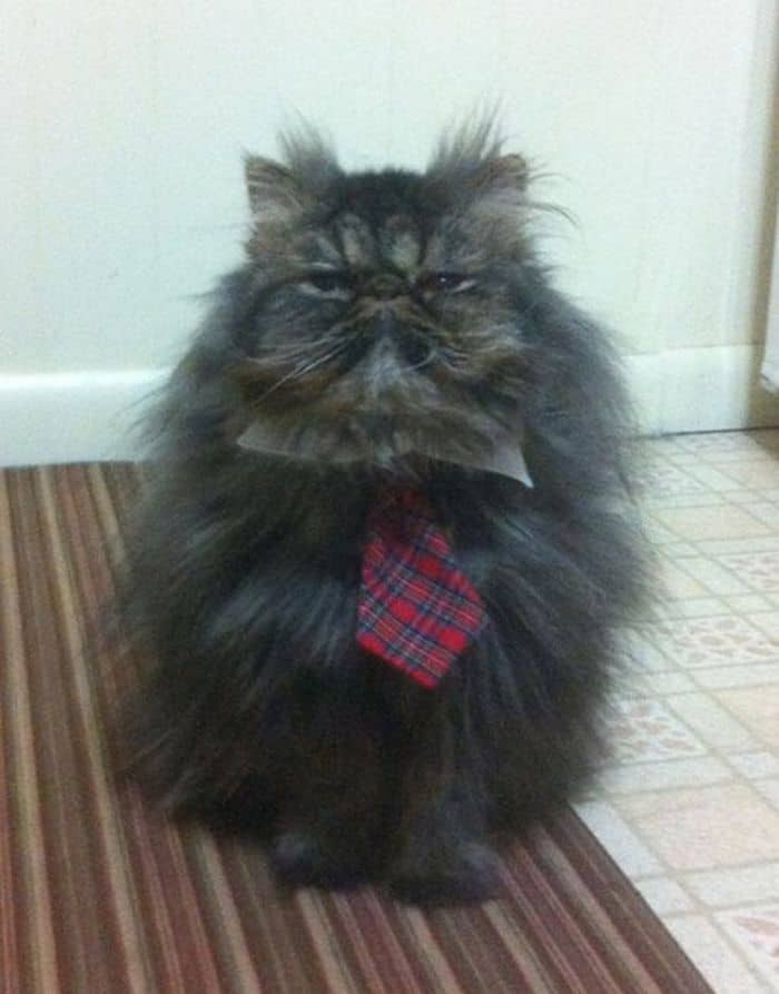 87 Well Dressed Animals That Will Make You LOL -38