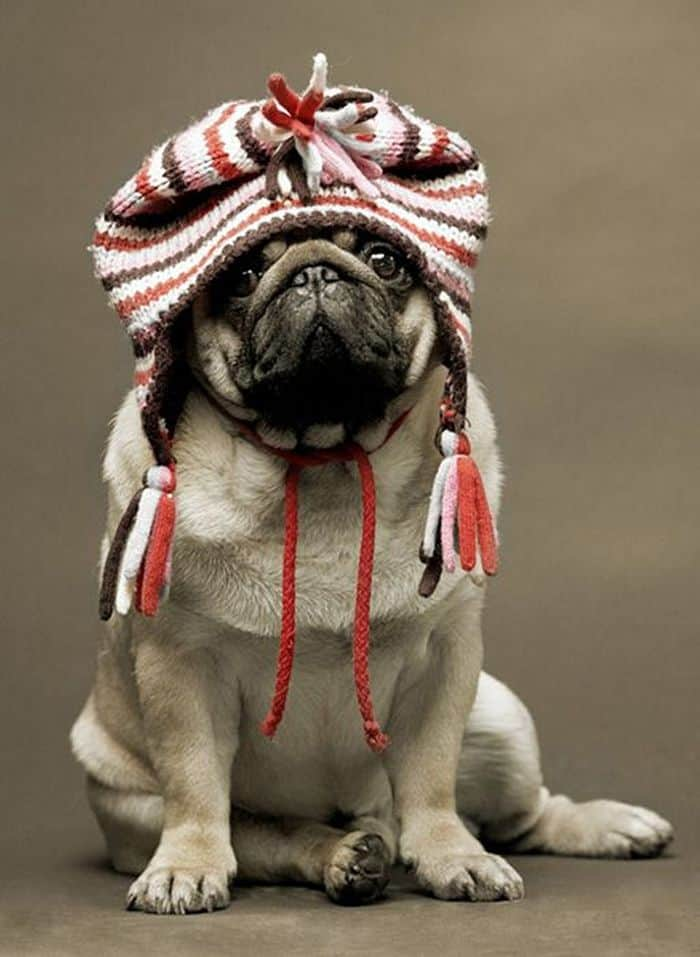 87 Well Dressed Animals That Will Make You LOL -46