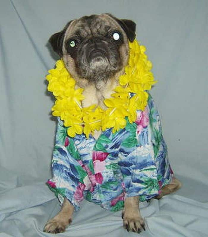 87 Well Dressed Animals That Will Make You LOL -51