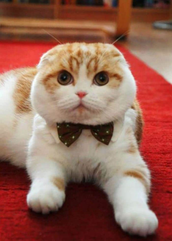 87 Well Dressed Animals That Will Make You LOL -54