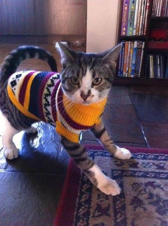 87 Well Dressed Animals That Will Make You LOL -64
