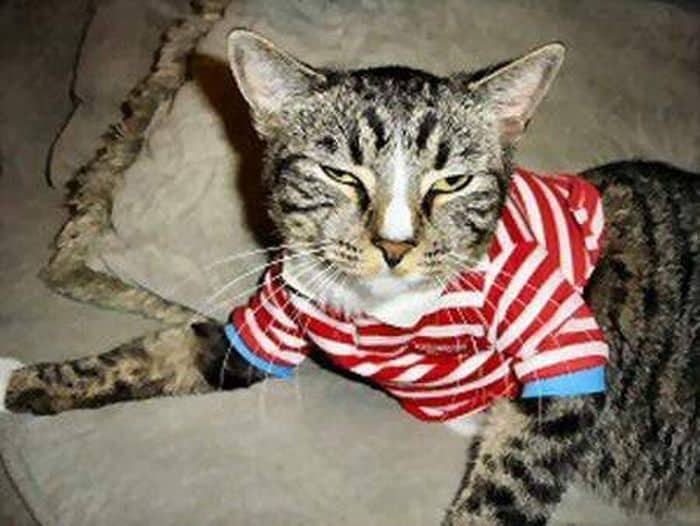 87 Well Dressed Animals That Will Make You LOL -65