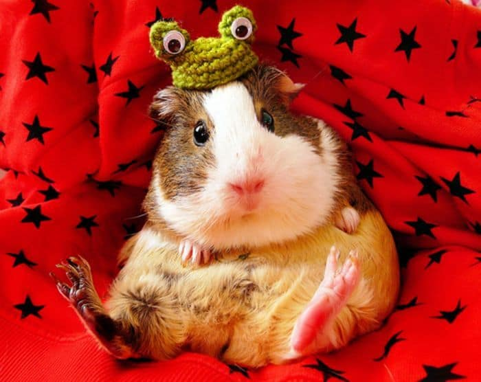 87 Well Dressed Animals That Will Make You LOL -66