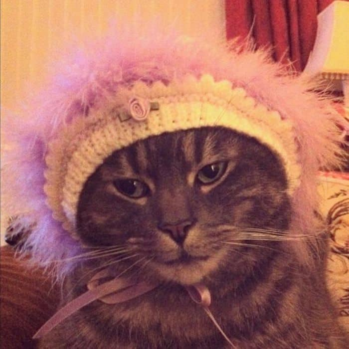 87 Well Dressed Animals That Will Make You LOL -67