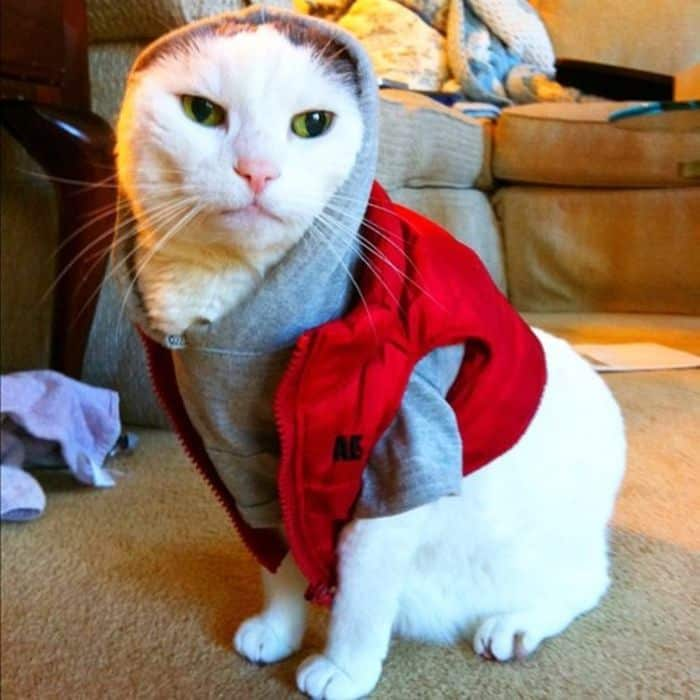 87 Well Dressed Animals That Will Make You LOL -73