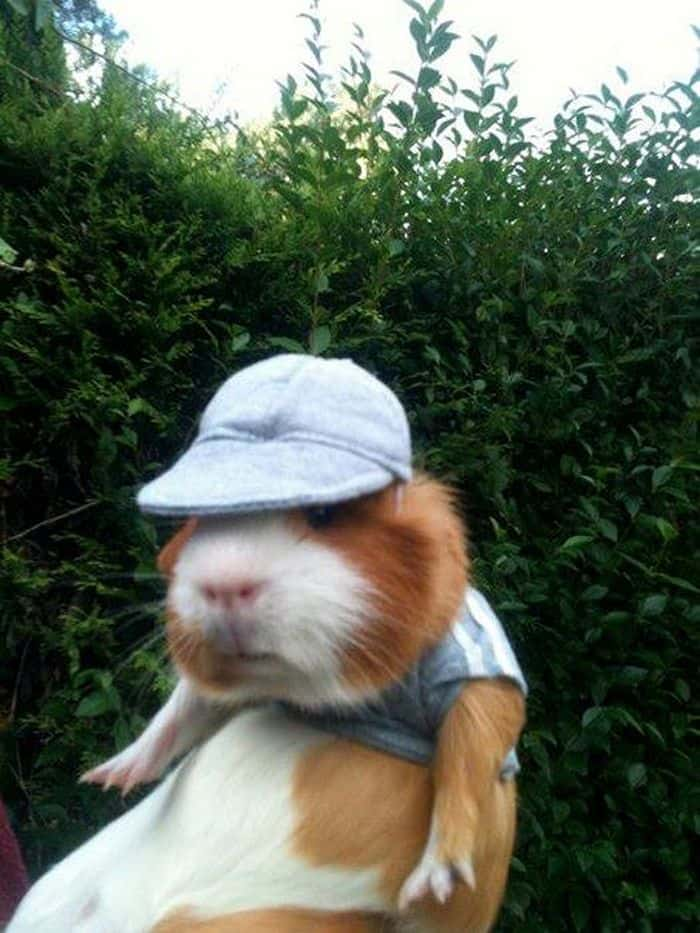 87 Well Dressed Animals That Will Make You LOL -75