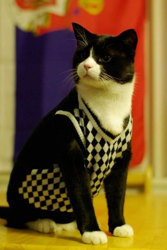 87 Well Dressed Animals That Will Make You LOL -82