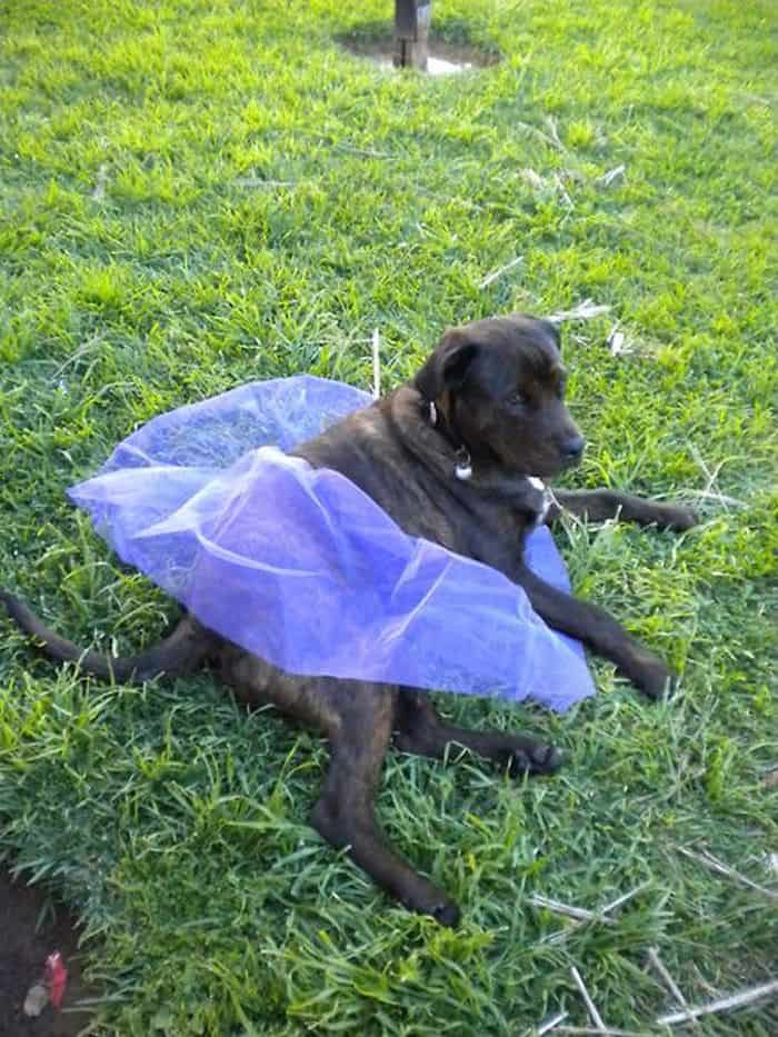 87 Well Dressed Animals That Will Make You LOL -87