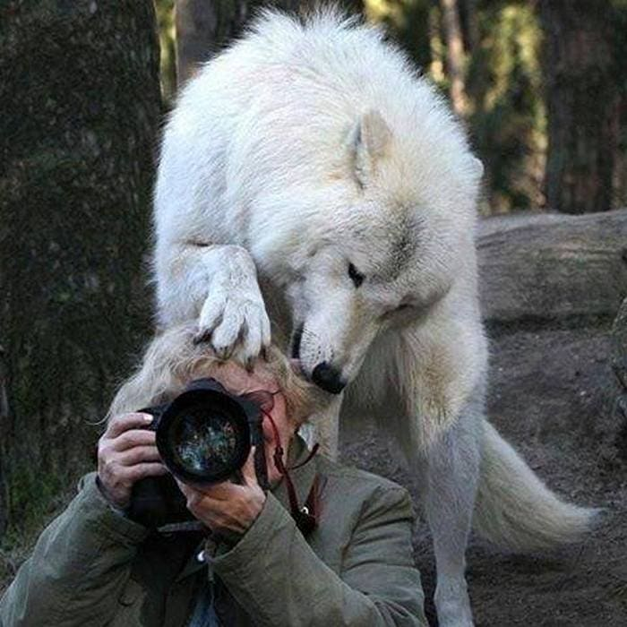 Wildlife Photography Disasters That Will Make You LOL (33 Pics)-05