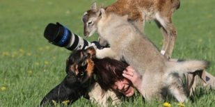 Wildlife Photography Disasters That Will Make You LOL (33 Pics)