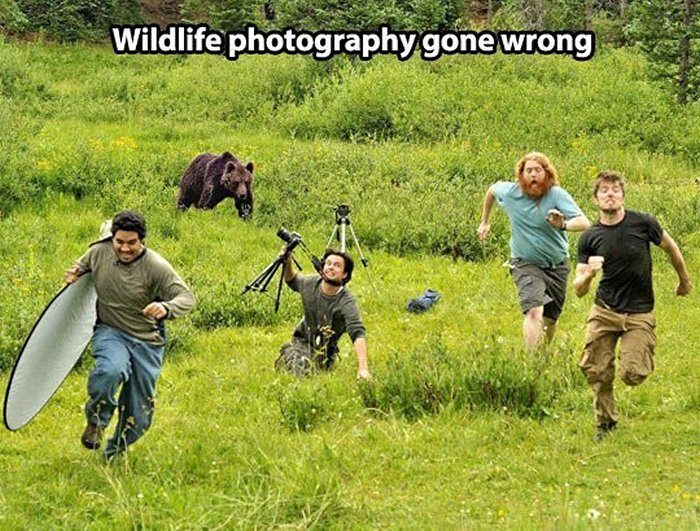 Wildlife Photography Disasters That Will Make You LOL (33 Pics)-27